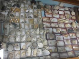 Collezione di minerali e molluschi