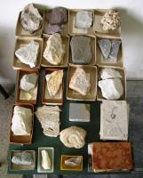 Collezione di rocce sedimentarie