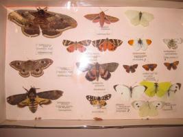 Lepidotteri della Garfagnana