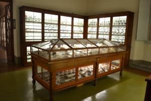 Sala C - Malacologia