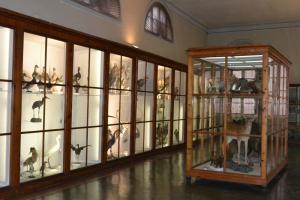Sala F - Ornitologia e Mammalogia