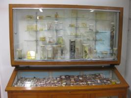 Vetrina - esposizione laboratorio di biologia